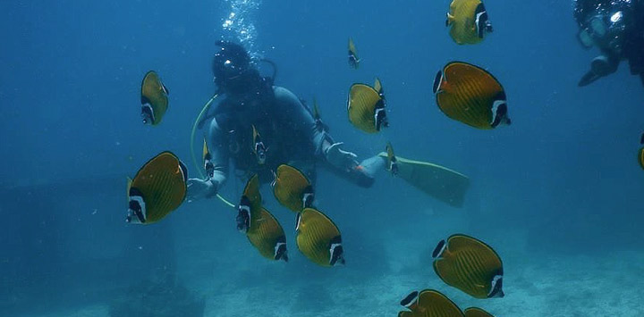 Butterflyfishes Chumphon Thailand