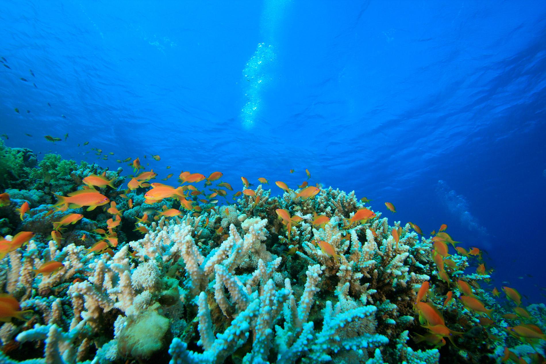 deep-sea-scuba-diving-thailand