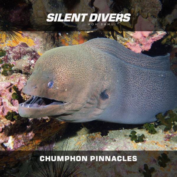 Tour de plongée à Chumphon Pinnacle - Thaïlande