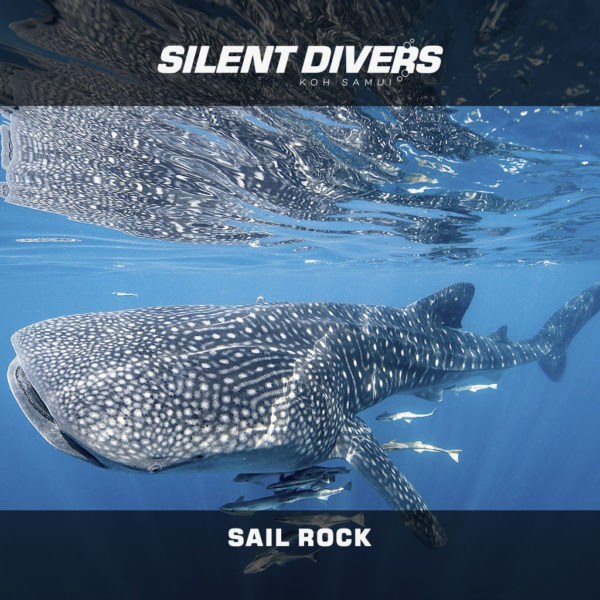 Sail Rock diving trips Thailand