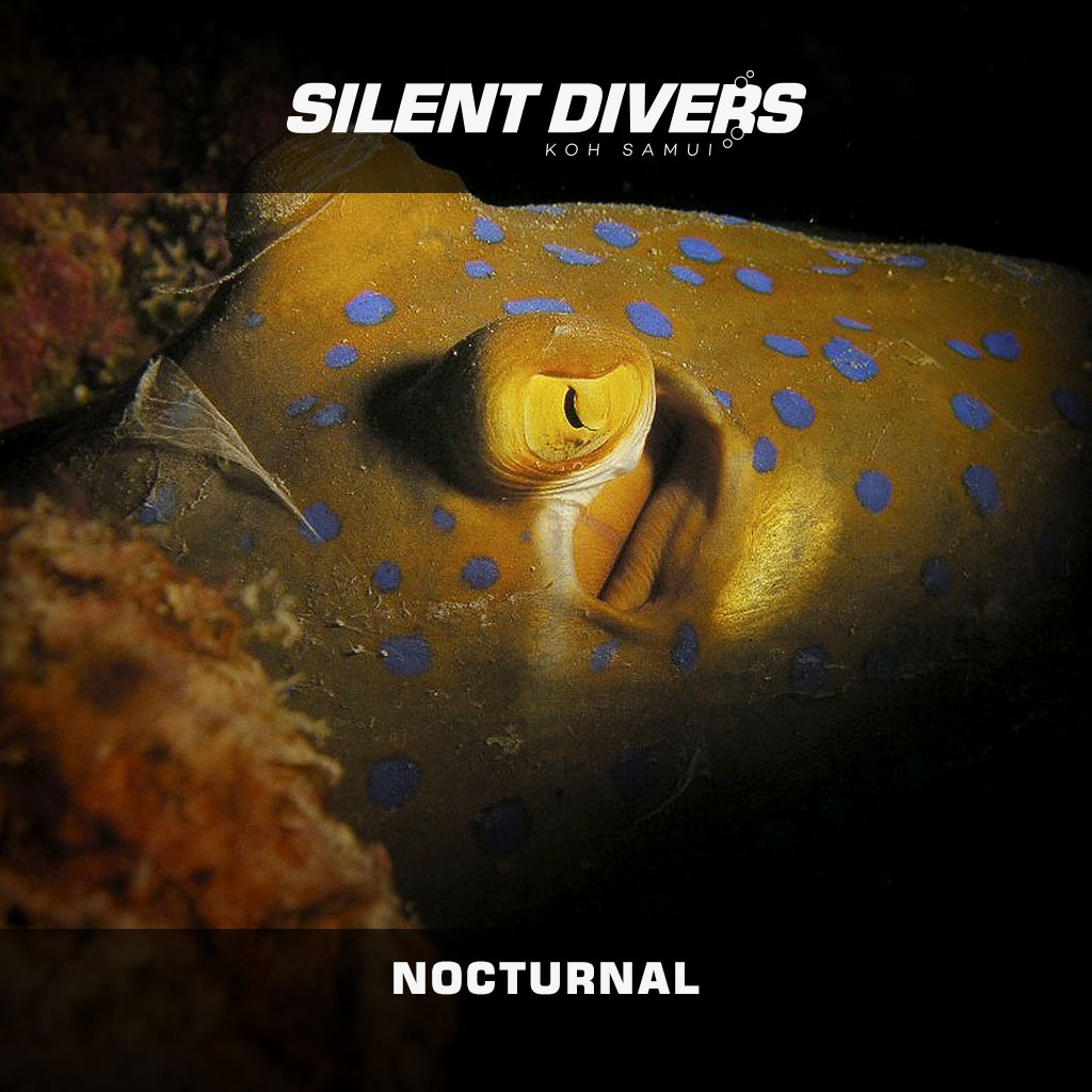 Buceo nocturno a Sail Rock