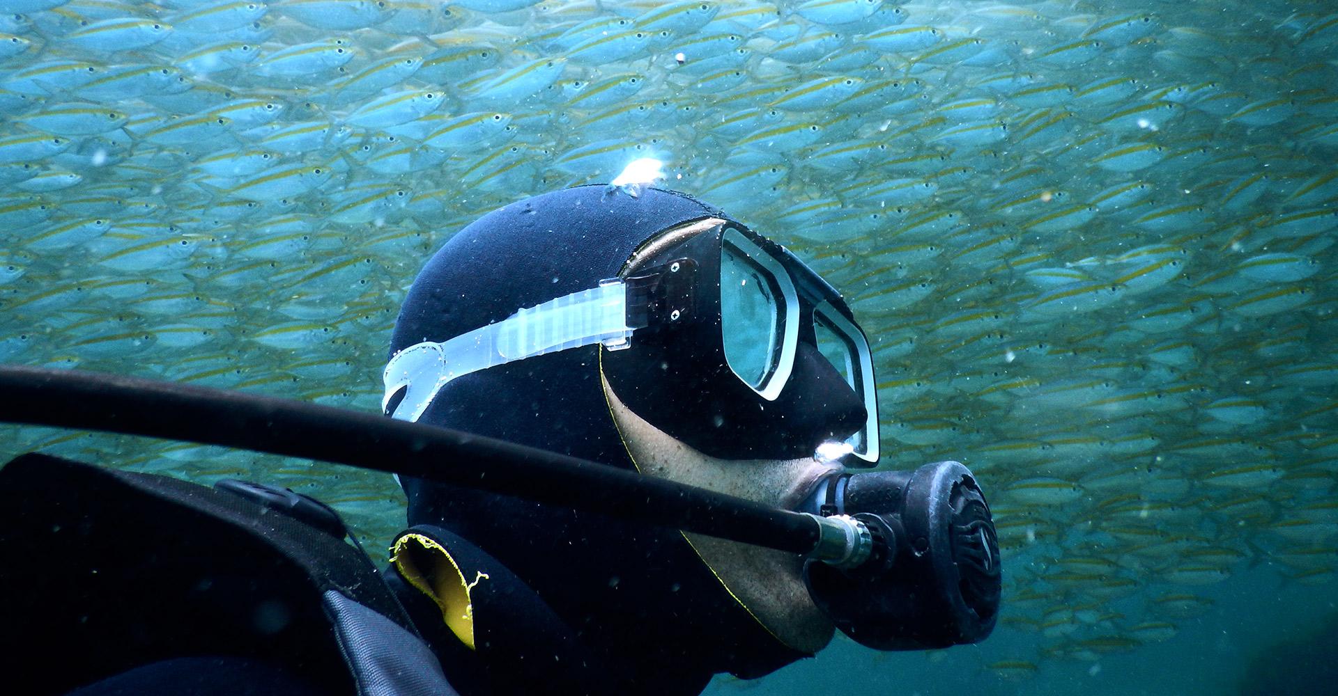 Scuba diving locations koh samui thailand silent divers - Padi dive locations ...