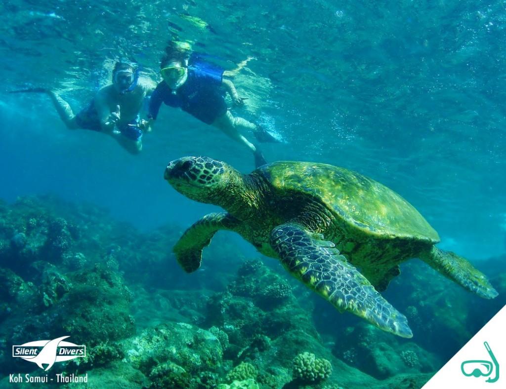 Snorkeling Ang Thong