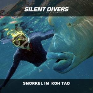 Snorkeling Koh Tao Thailand