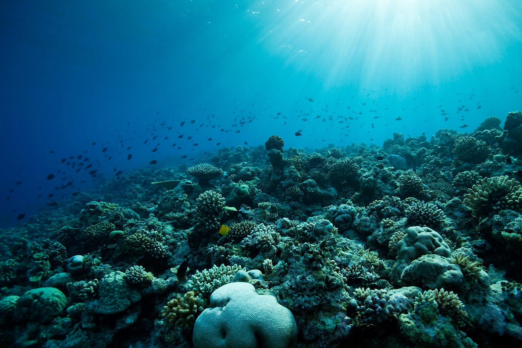underwater-samui